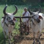 Gujarat's Palitana and Alang